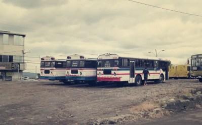 Typische Busse