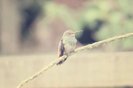 Ein schlafender Kolibri