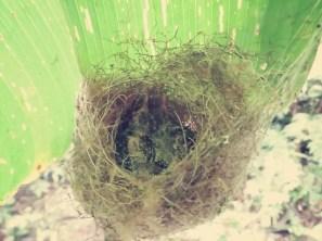 Auf dem Weg durch den Wald entdeckten wir ein Kolibri Nest