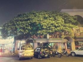 Tree House Restaurant, Santa Elena