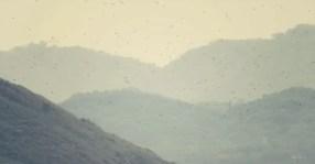 Wir haben Blick auf das Brutgebiet der Fregattvögel und braunen Pelikane - Reservat Isla Bolanos