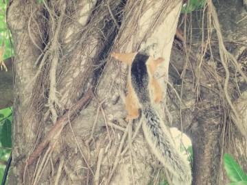 Ein Costa-Rica-Eichhörnchen besuchte uns am Schatten spendenen Baum
