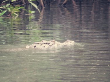 Krokodile gibt's hier im Fluss