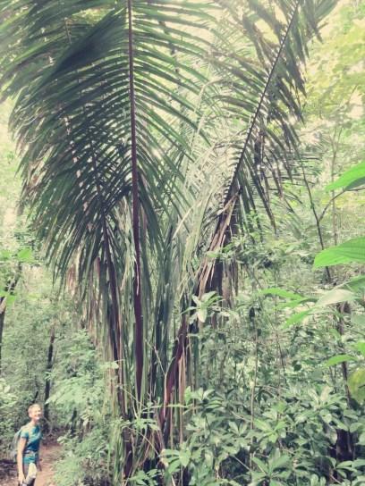 Die Palmen sind rieeeesig