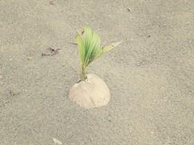 Eine neue Palme wächst und gedeiht