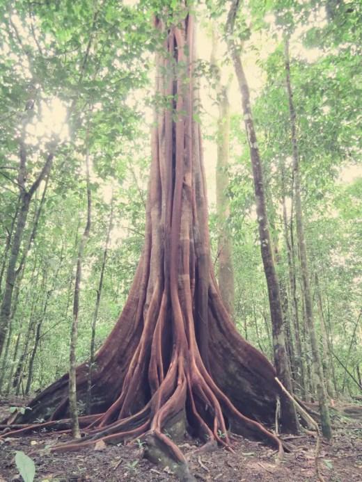 Gigantische Bäume