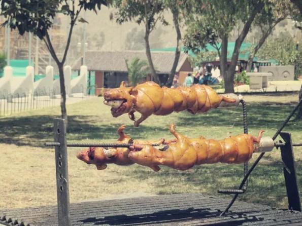Cuy - Meerschweinchen - Eine Delikatesse
