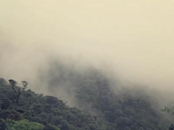 Schön neblig im Nationalpark Podocarpus