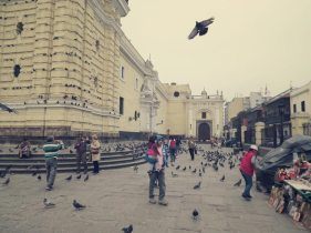 Hier werden die Tauben noch gefüttert