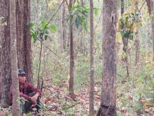 Ein Mahut in der Nähe seines Elefanten