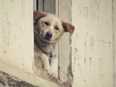 Der Hund aus dem Nachbarhaus