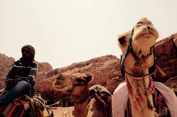 Kamele, Petra, Jordanien