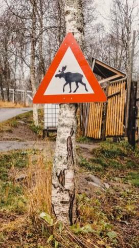 Weltentdecker-des-Monats-Elchschild-Norwegen