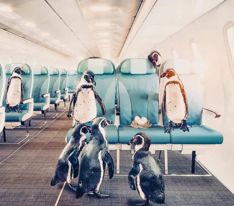 Flughafen BER Berlin Zoo Pinguine
