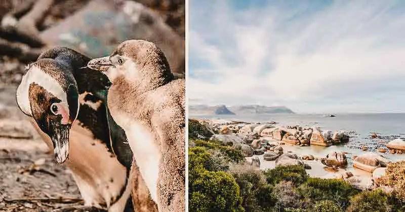 Kapstadt Sehenswürdigkeiten Boulders Beach