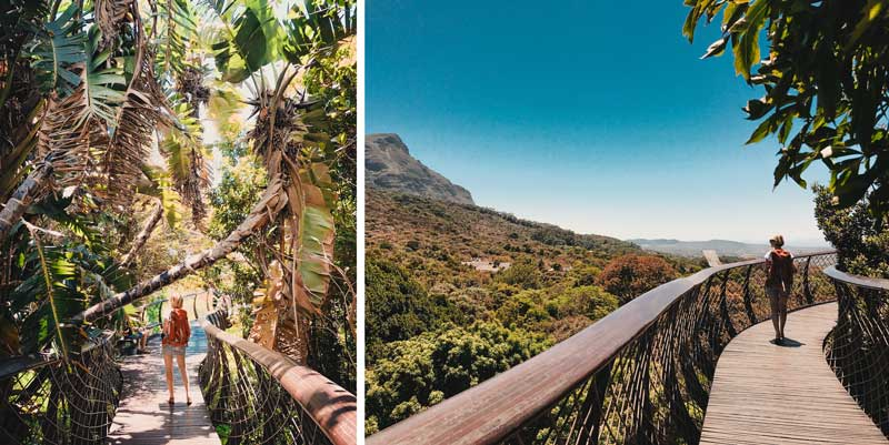 Kapstadt Sehenswürdigkeiten Kirstenbosch