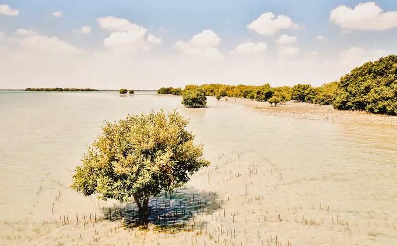 Katar in 3 Tagen – Katar Sehenswürdigkeiten – Mangroven