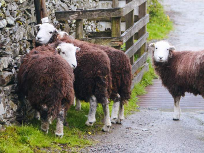 lakedistrict_greatlangdale_04_herdies
