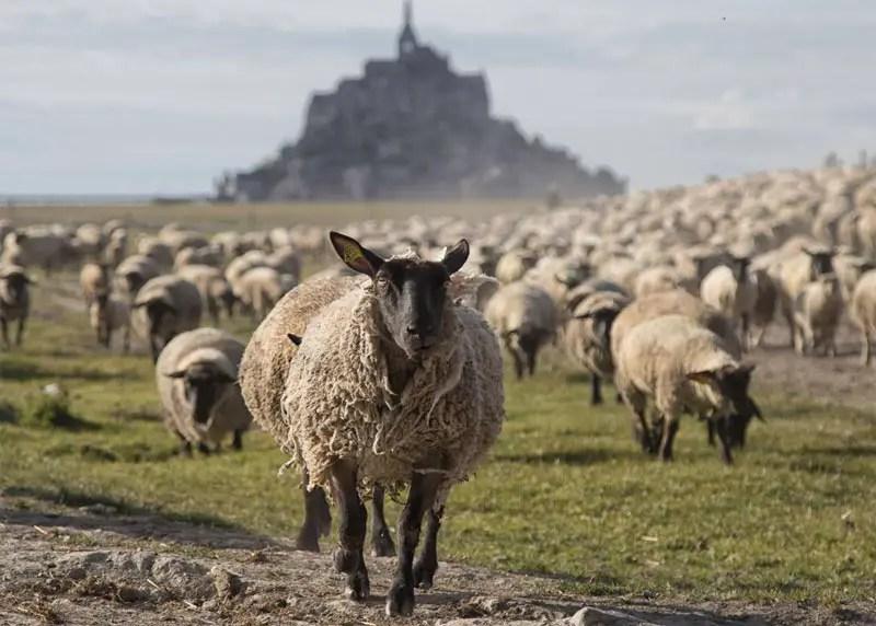 Normandie - Mont Michel