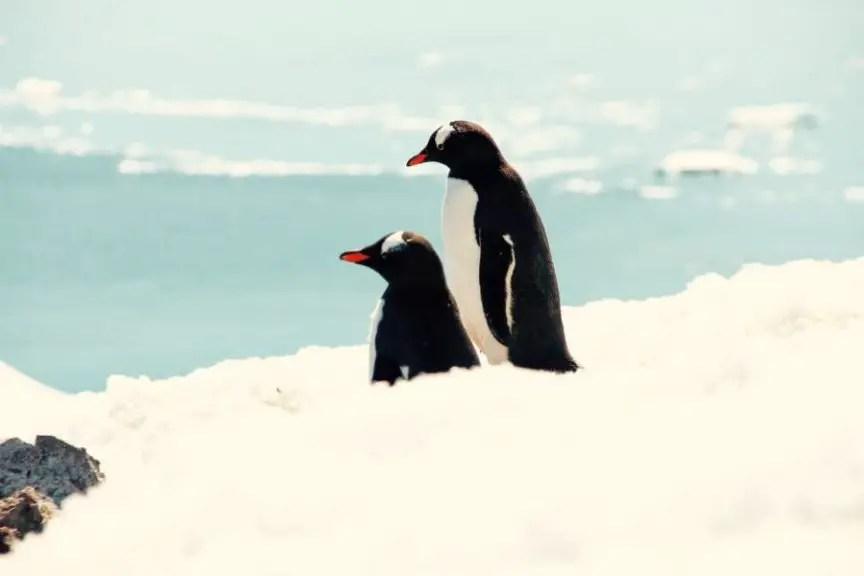 Reiseziele Dezember Antarktis