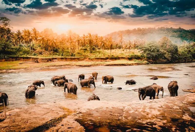 Reiseziele im Februar Sri Lanka