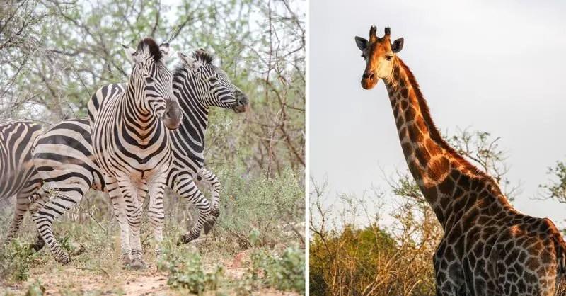 Reiseziele Januar Südafrika