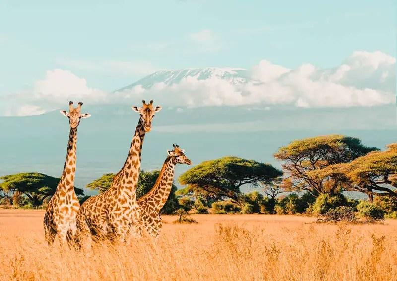 Reiseziele Oktober Kenia