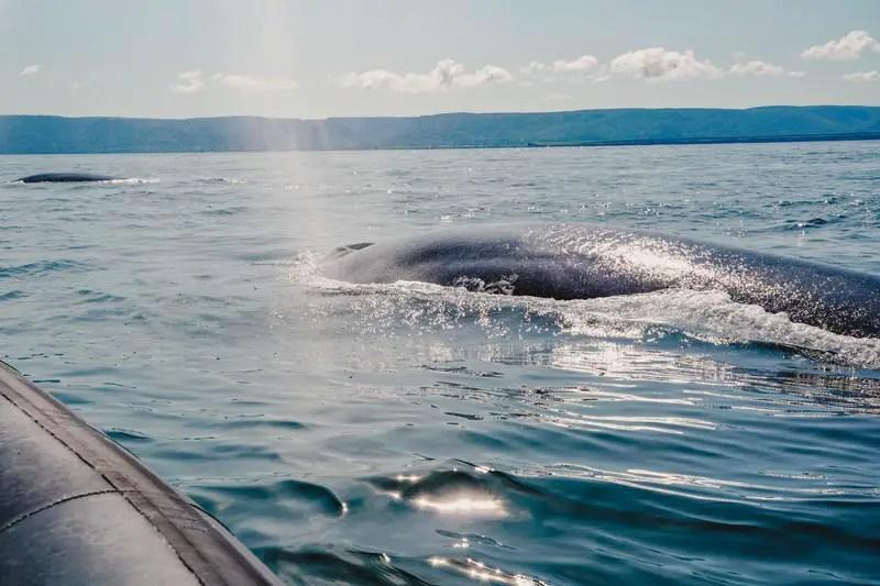 Nova Scotia Whale Watching