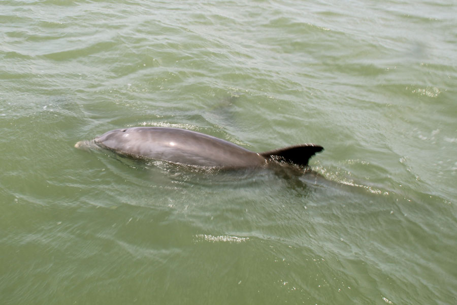 wetraveltheworld_Delfin-florida
