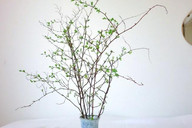 Sträucher in einer Vase