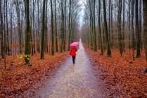 Ville-Wald bei Regen
