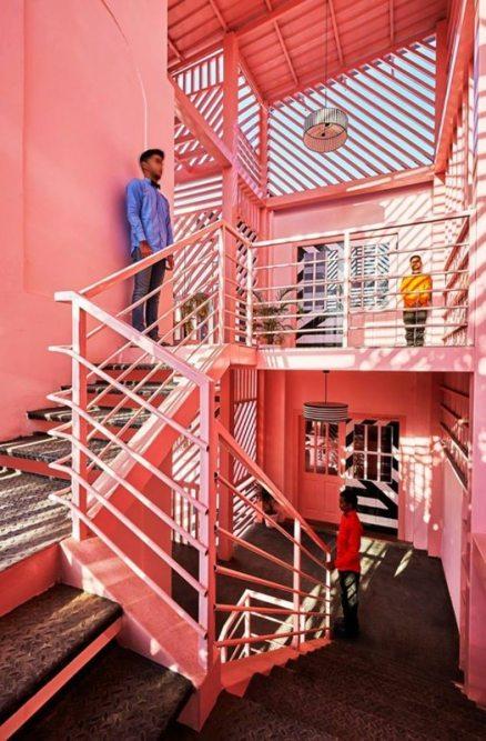pink-zebra-6