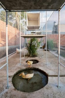 tropical-space-chicken-house-9