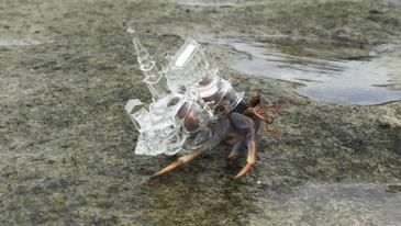 3049707-poster-p-1-this-hermit-crab-has-a-glass-cathedral-for-a-shell