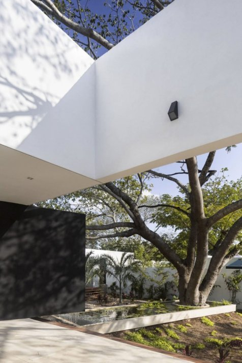 casa-del-arbol-6