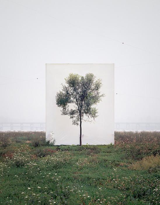 4.Myoung Ho Lee,  tree, contemporary (he)art, contemporary art, wevux, giulia serafin, arte contemporanea, alberi, natura, fotografia, tele, paesaggio, nature, photograpy, canvas, landscape, minimal, surreal, surreale, Corea, korean artist