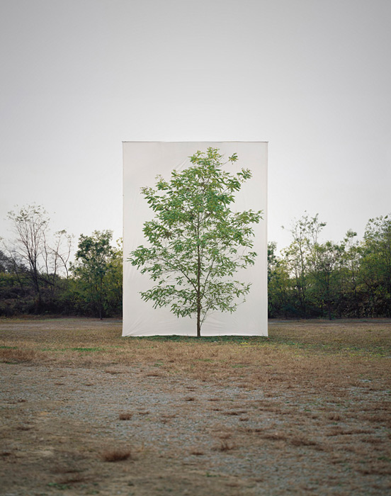 7.Myoung Ho Lee,  tree, contemporary (he)art, contemporary art, wevux, giulia serafin, arte contemporanea, alberi, natura, fotografia, tele, paesaggio, nature, photograpy, canvas, landscape, minimal, surreal, surreale, Corea, korean artist