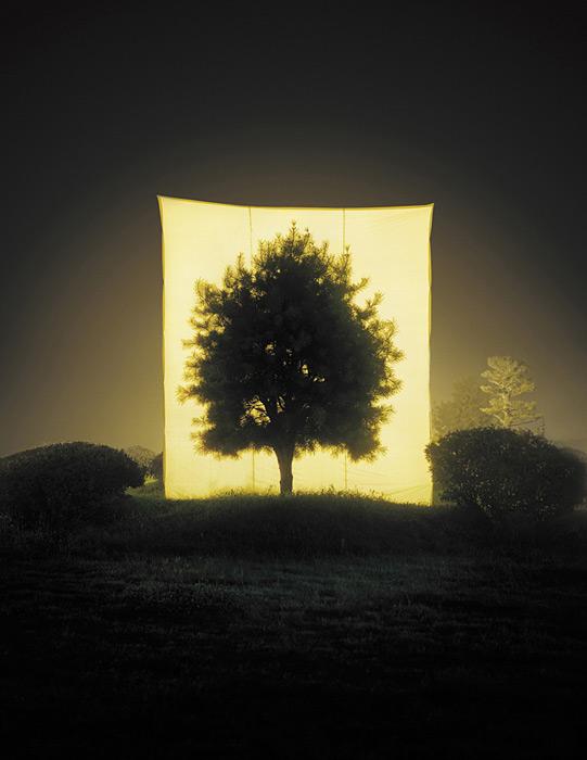 9.Myoung Ho Lee,  tree, contemporary (he)art, contemporary art, wevux, giulia serafin, arte contemporanea, alberi, natura, fotografia, tele, paesaggio, nature, photograpy, canvas, landscape, minimal, surreal, surreale, Corea, korean artist