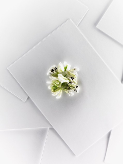 CEREAL_flower