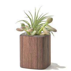 walnut-desk-collection-planter-tall-A2_645x645_85