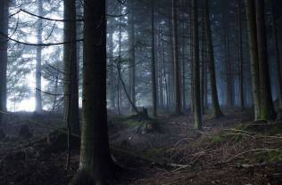 Thrilling-and-Mysterious-Pictures-of-Slovenian-Forests10-900x595