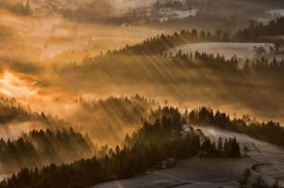 Thrilling-and-Mysterious-Pictures-of-Slovenian-Forests2-900x599