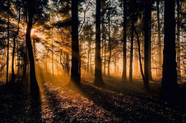 Thrilling-and-Mysterious-Pictures-of-Slovenian-Forests6-900x595