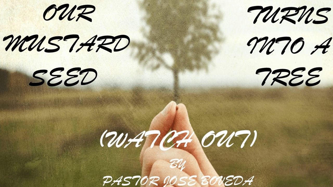 Our Mustard Seed Turns Into A Tree (Watch Out!)