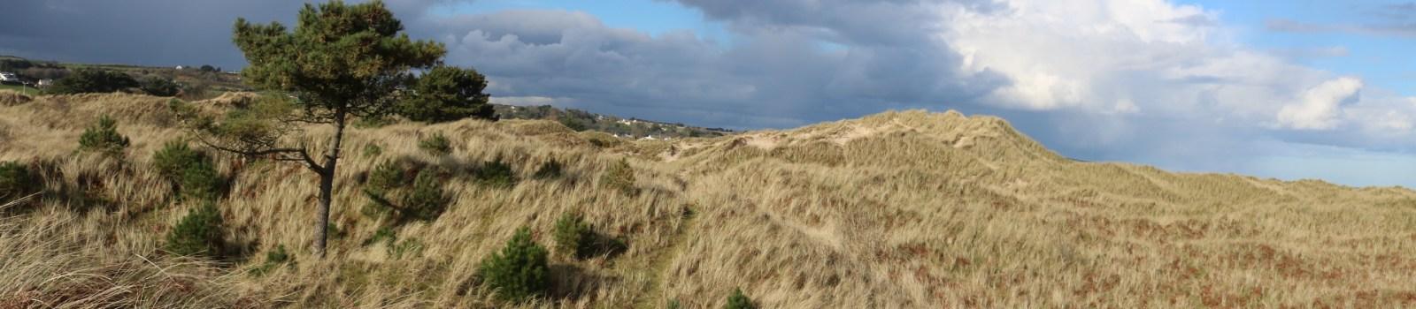 Curracloe Dunes White Gap