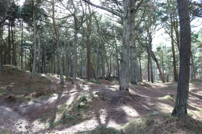 Curracloe Woods Culletens Gap 2017-02-27 (7)