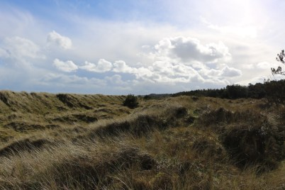 Raven Point Curracloe 2017-02-27 13.31.06 (26)
