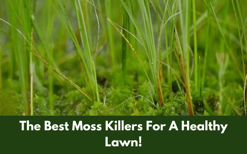 The Best Moss Killers For A Healthier Lawn