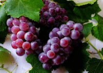 Grow vine Fruit