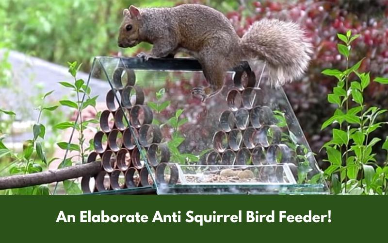 An Elaborate Anti Squirrel Bird Feeder!